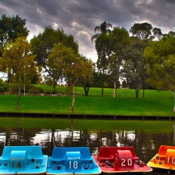 Paddle boats on Torrens Lake